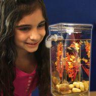خرید آکواریوم جادویی Fun Fish اصل ارزان