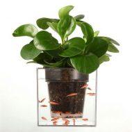 خرید گلدان آکواریوم دار جادویی ارزان قیمت برای نوروز 97